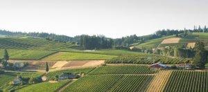 Furioso vineyard aerial view