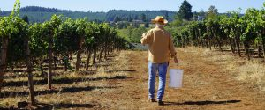 man walking in vineyard with bucket