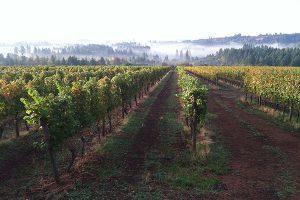 late summer vines