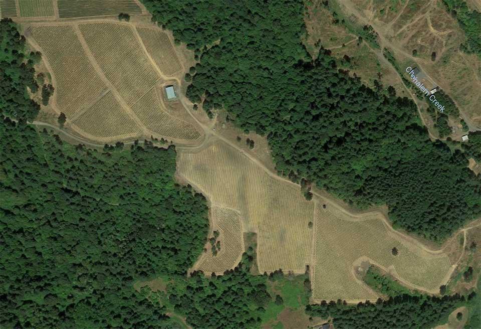 vineyard aerial photo